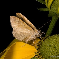 Makrofotografie - Fliegende Insekten