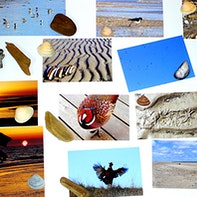 Beach magnet wall