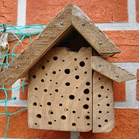 Bee hotel with insight
